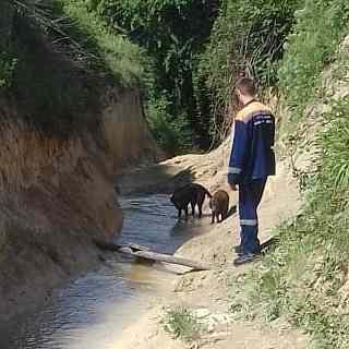 ВНовороссийске для спасения собак пришлось вызывать МЧС