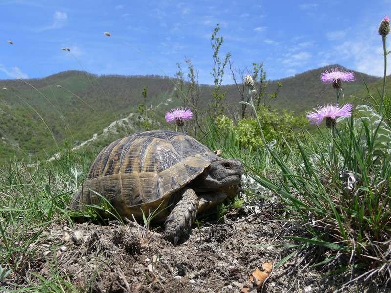В Мысхако «роддом» для черепах хотят отдать под государственную охрану