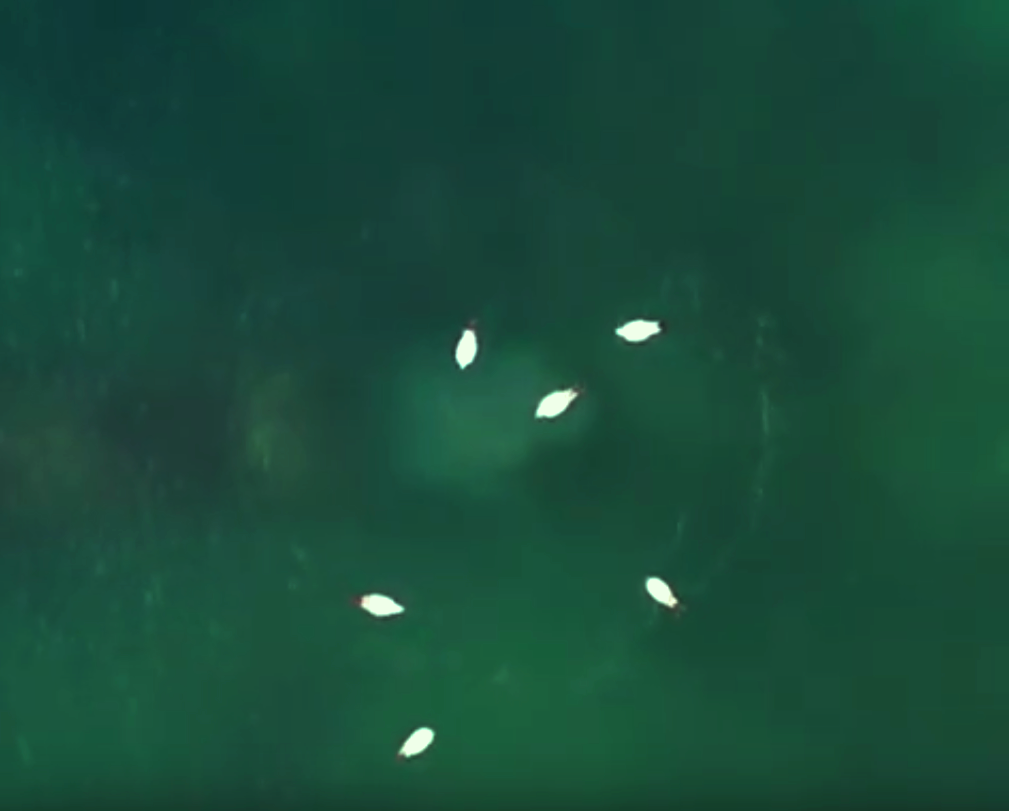 Странное пятно в море возле «Нептуна»