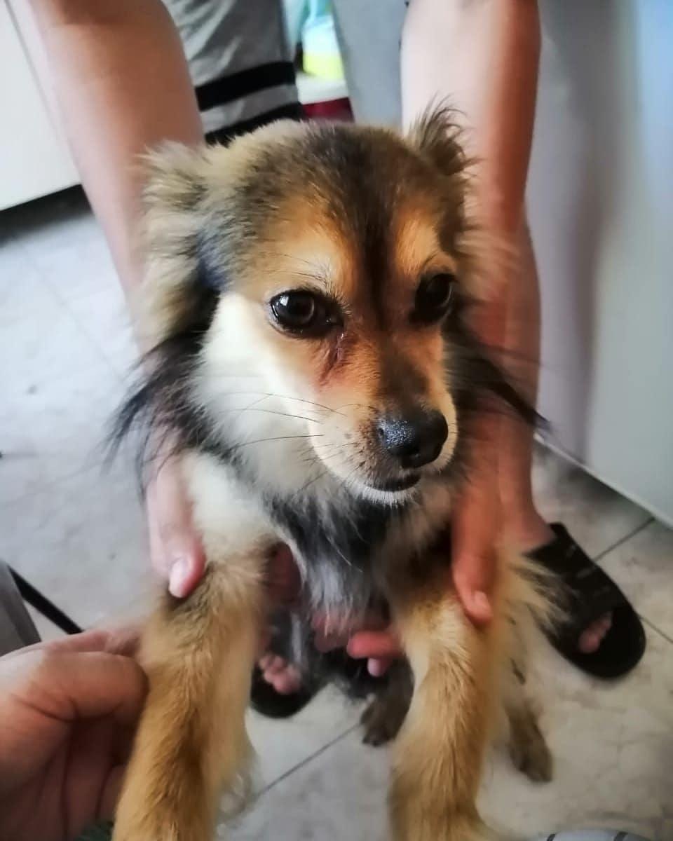 Врачи «скорой» вНовороссийске нетолько спасли жизнь человеку, ноипомогли найти любимую собаку