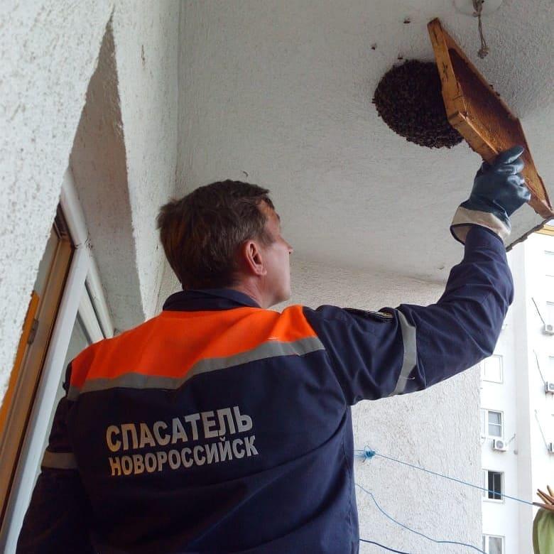 В Новороссийске спасали пчелиный рой, котиков и змеек