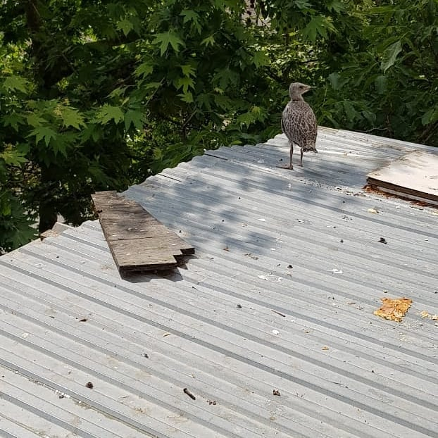 ВНовороссийске чайки теряют своих детей