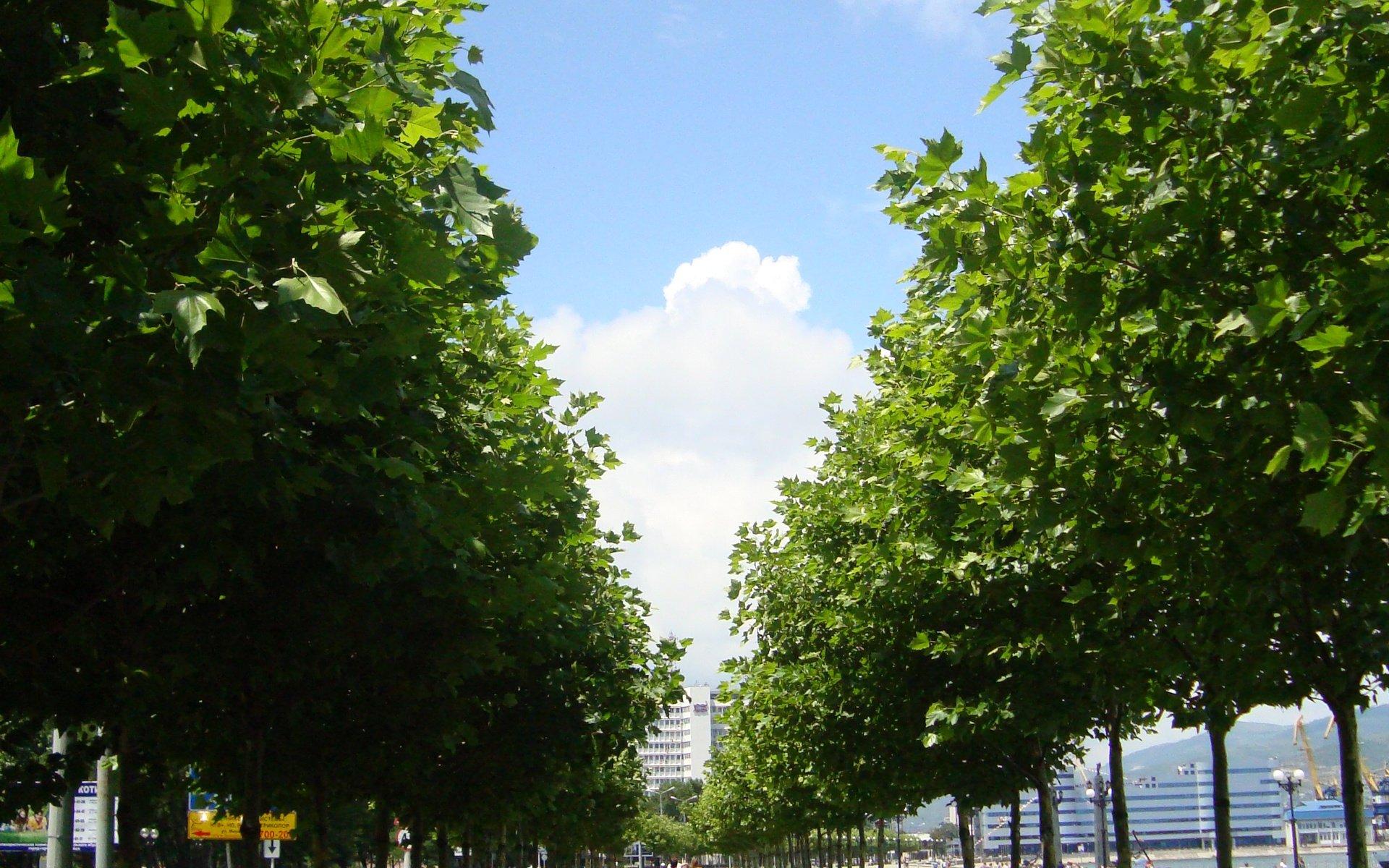На улицах Новороссийска зашелестят листвой гибискусы и сакуры