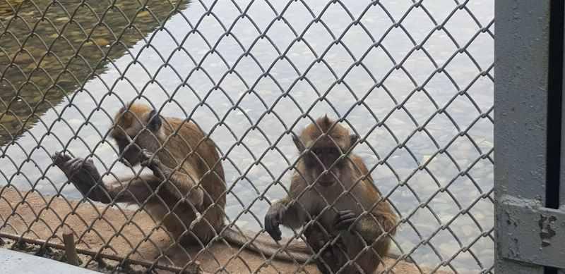 Страдания животных продолжаются: 300 макак отправили наопыты