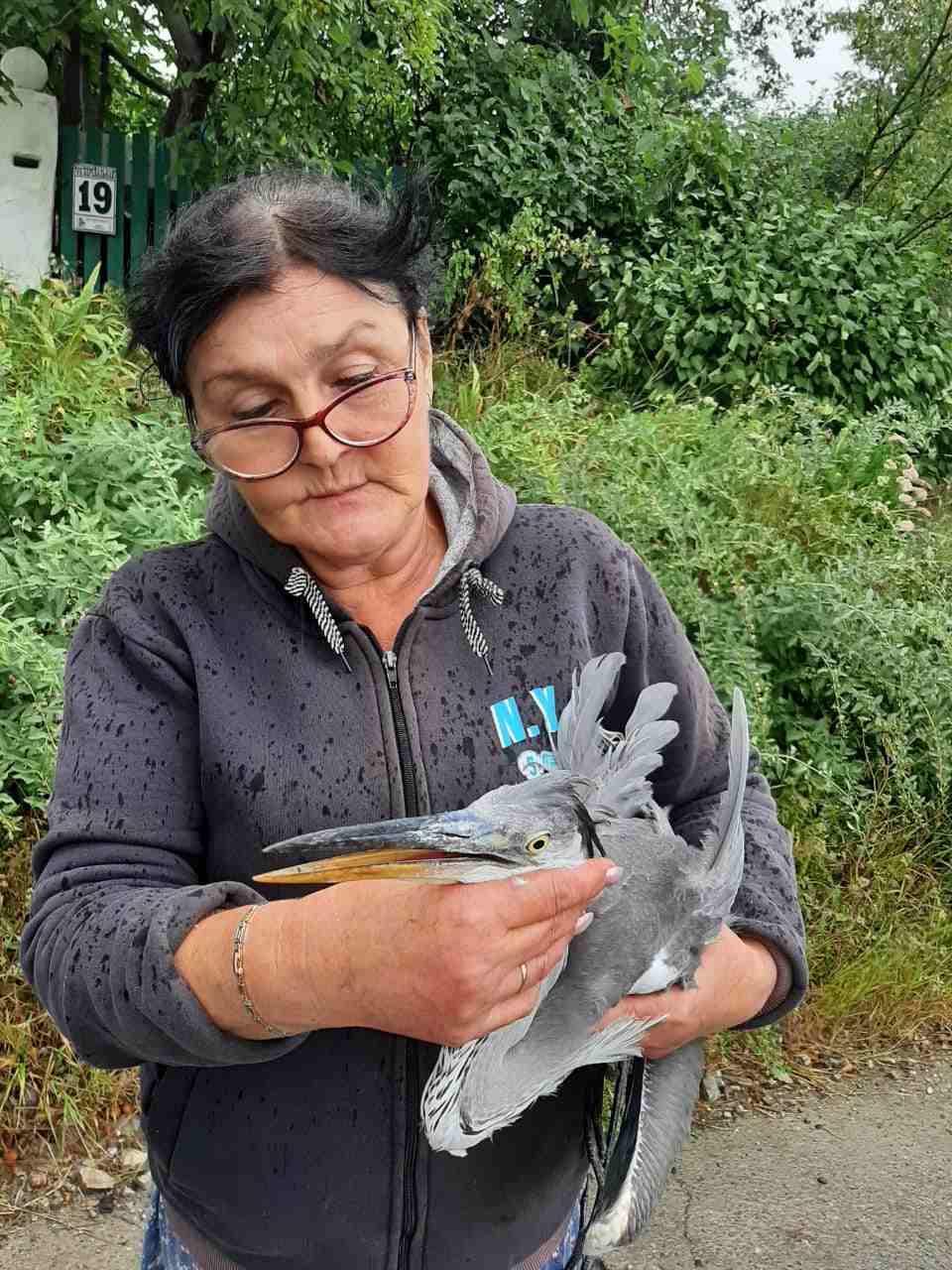 Раненую цаплю взяли под крыло жительницы Новороссийска