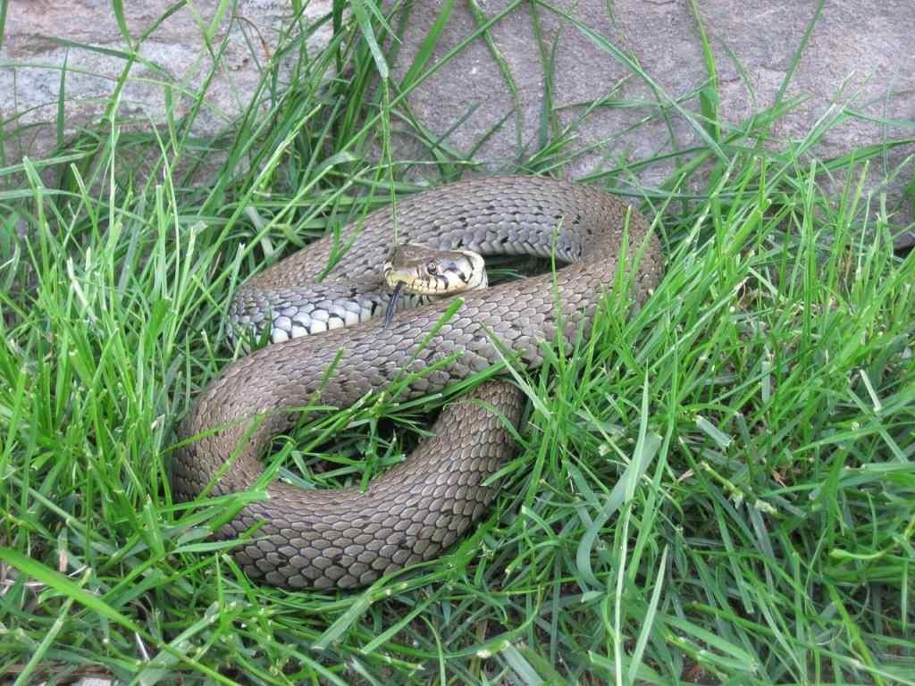 Отдождя ихолода змеи спасаются вдомах новороссийцев