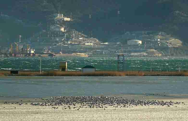 В Новороссийске вместе с появлением редких птиц начался бердвотчинг