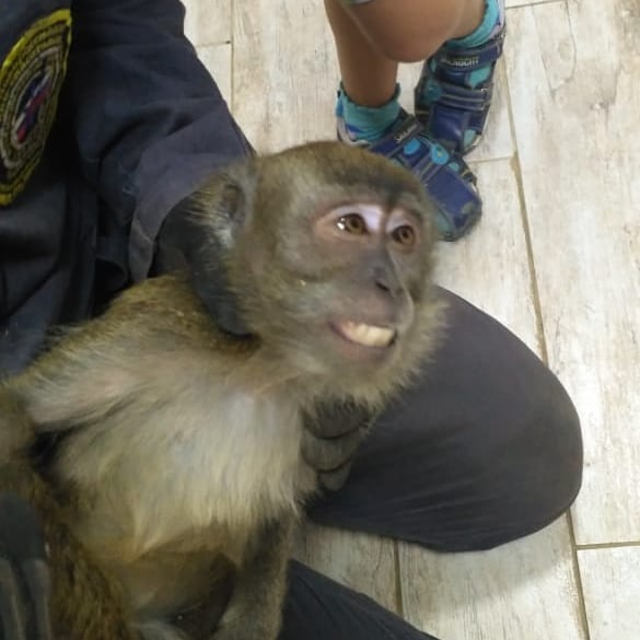 В Новороссийске спасатели выручали женщину и обезьяну