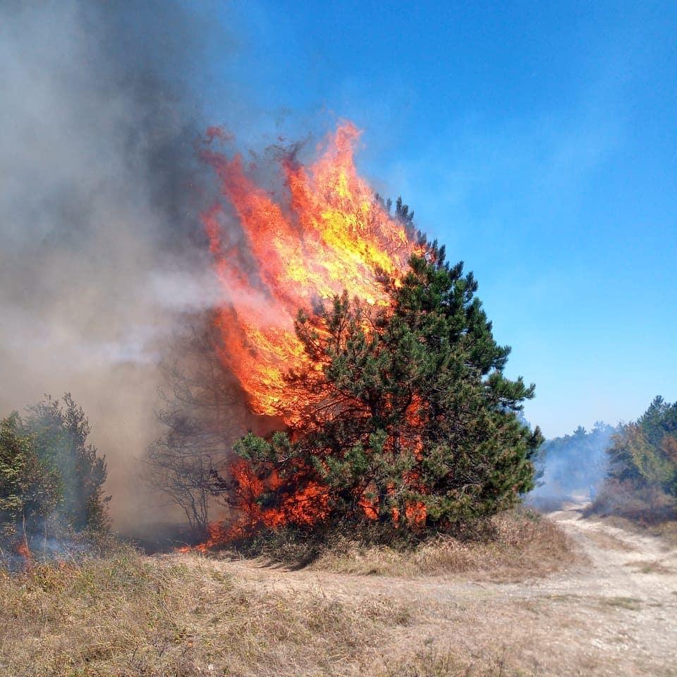 Под Новороссийском с большим трудом потушили лес
