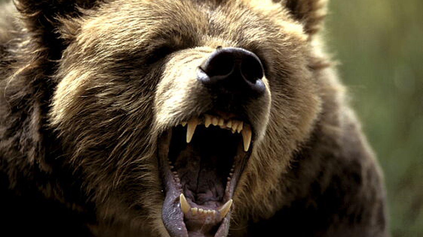 На новороссийских туристов напали медведи