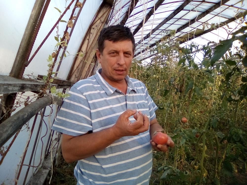 Новороссийцы делятся секретами создания эффективных иэкономичных мини-теплиц