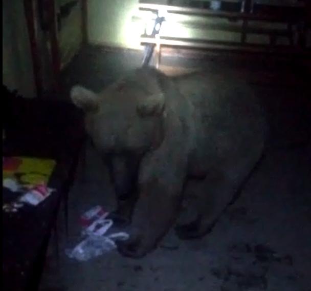 Новороссийских туристов медведем не испугаешь