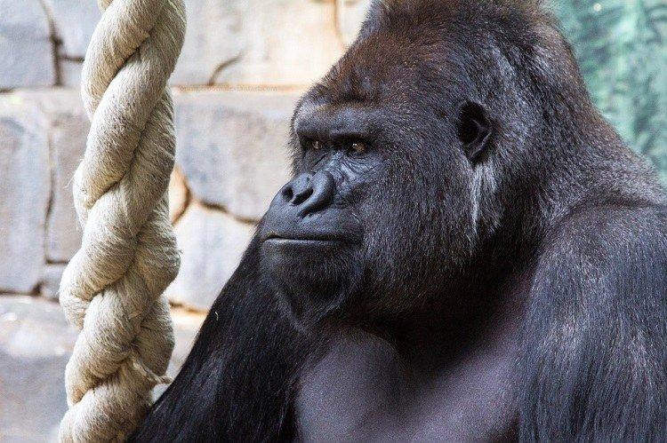 Мы любим зверей за то, что они похожи на нас. Но почему не любим людей?