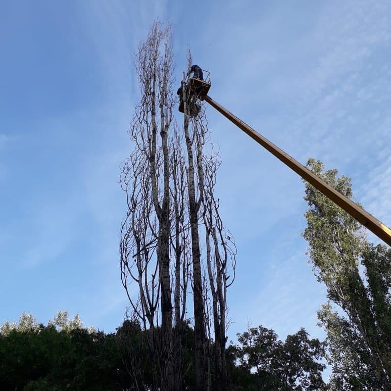 обрезка деревьев в Новороссийске