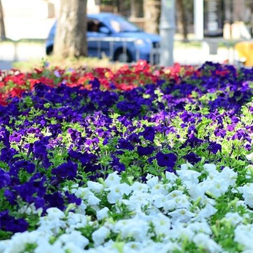 В Новороссийске меняют летние растения на зимние