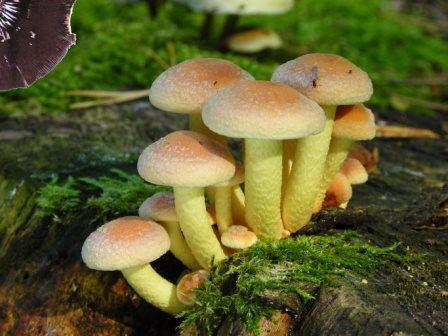 Новороссийцы уже травятся грибами