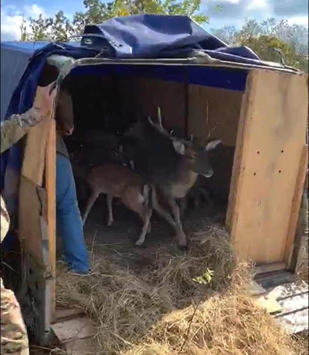 Под Новороссийском поселили оленей