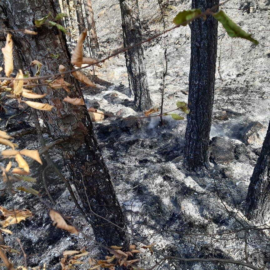 Вчера в Новороссийске снова горел лес