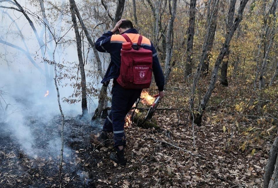 В Новороссийске горела сухая трава в лесу