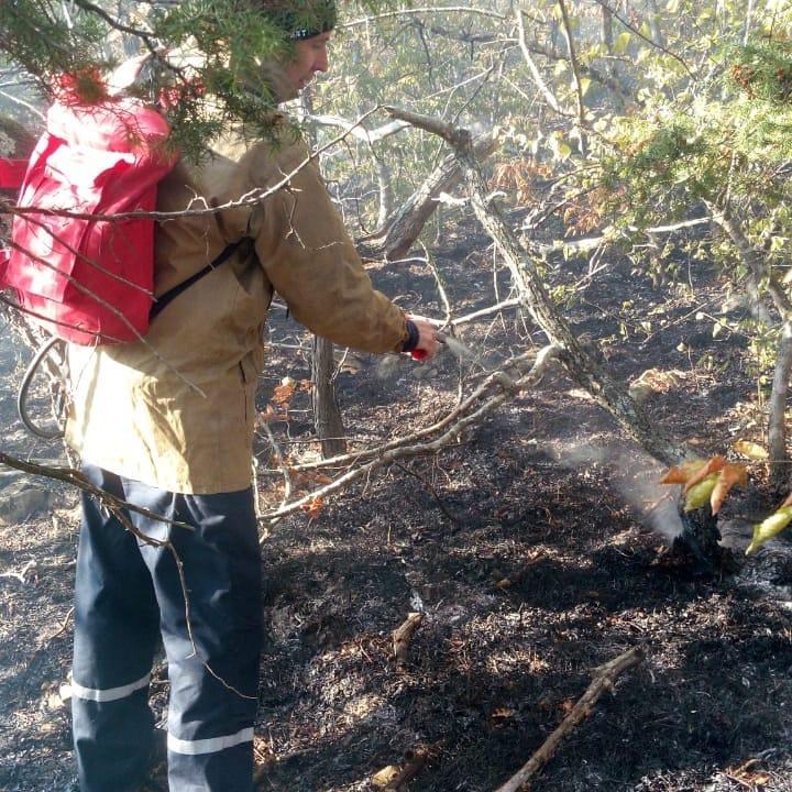 В Новороссийске горел лес