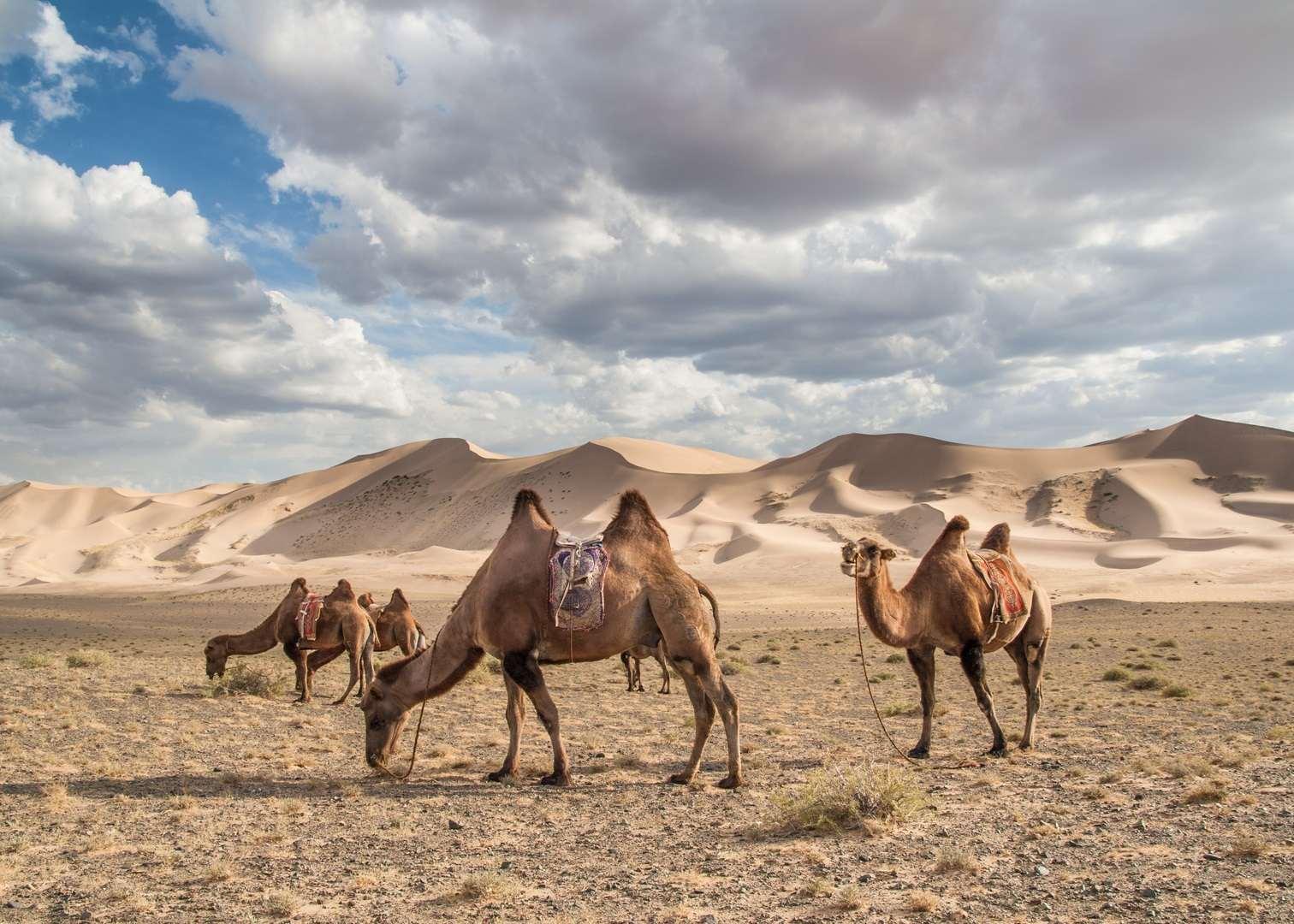 Новороссийцы покорили пустыню Гоби