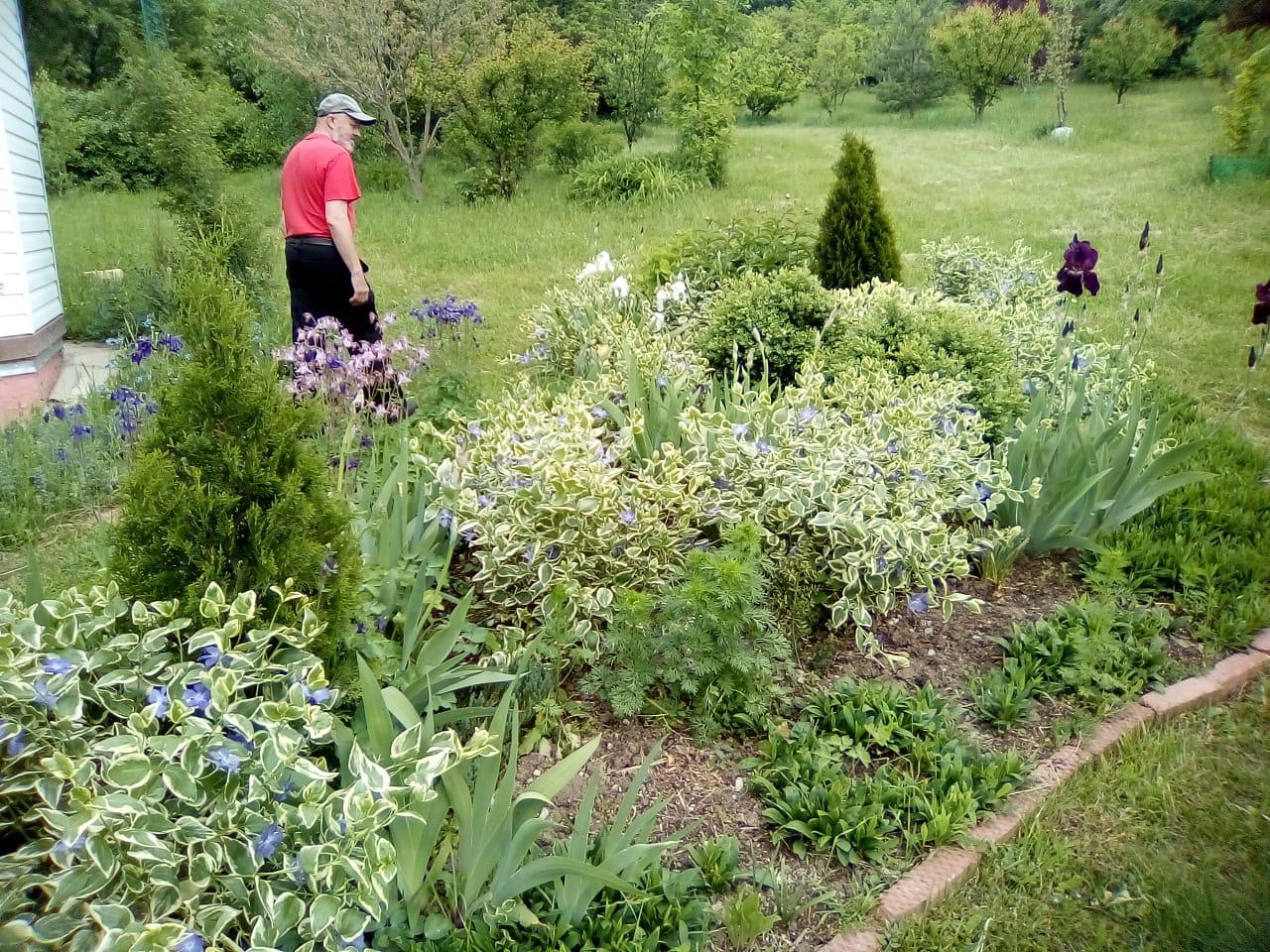 В Новороссийске лес растет в саду