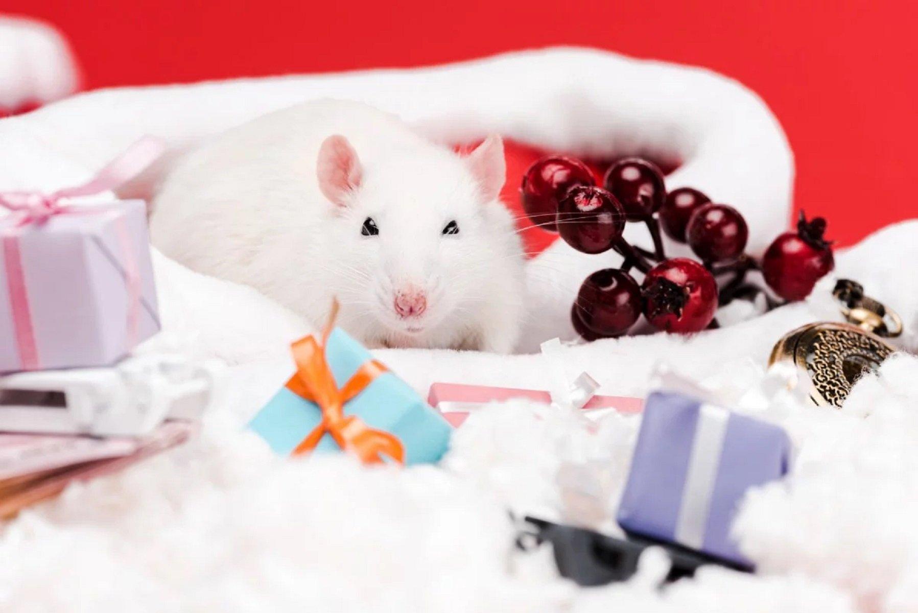 2020 год для Новороссийска стал годом 16-й Крысы