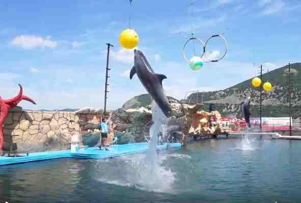 Знаменитый дельфинарий наУтрише никто нетрогает
