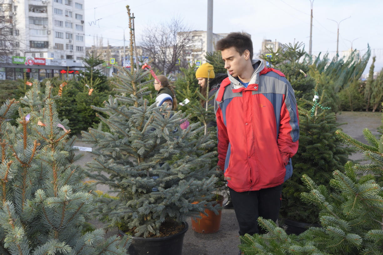 Новороссийцев ошарашили ценами на елки