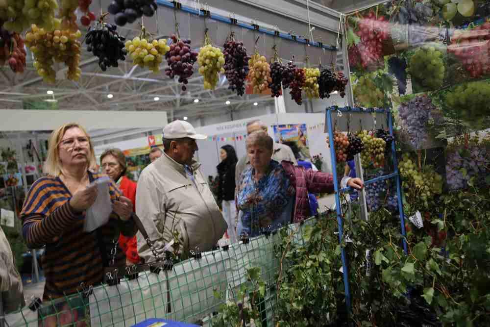 Новороссийские фермеры получили рекордный грант