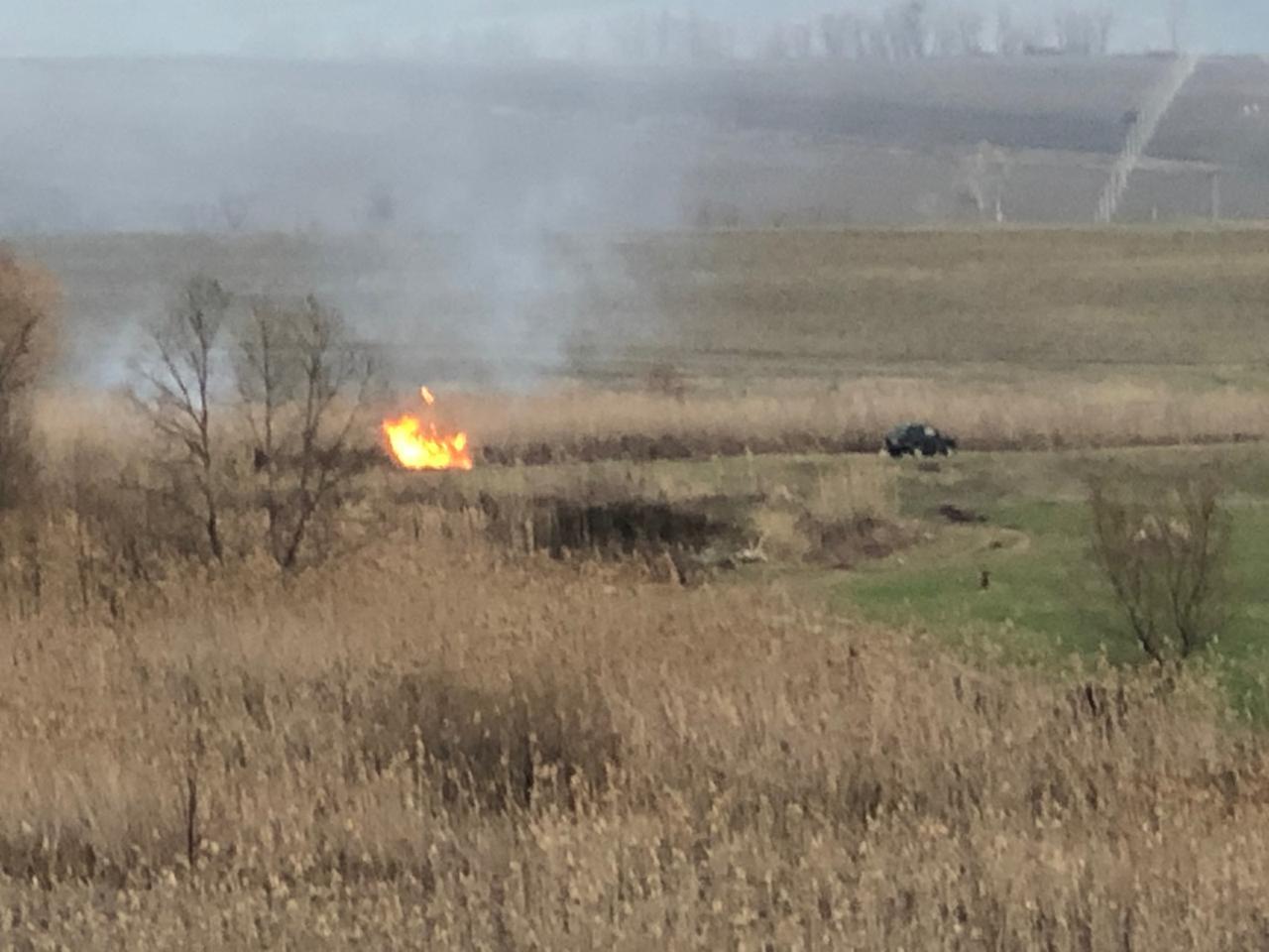 Под Новороссийском подожгли камыши, чтобы избавиться от енотов
