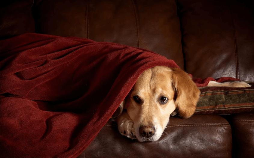 Новороссийцы потеряли собаку у себя в квартире
