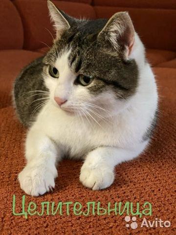 Кошку-целителя, стоимостью 20млн рублей, хотели купить трейдеры