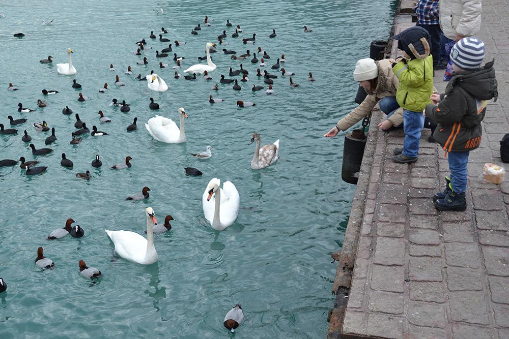 Нанабережной Новороссийска появятся таблички спросьбой некормить птиц хлебом