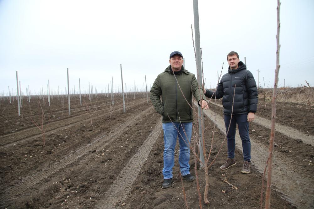 Под Новороссийском появится самый большой черешневый сад в России