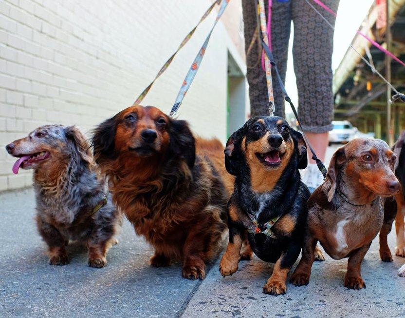 В Новороссийске появится первая муниципальная площадка для выгула собак