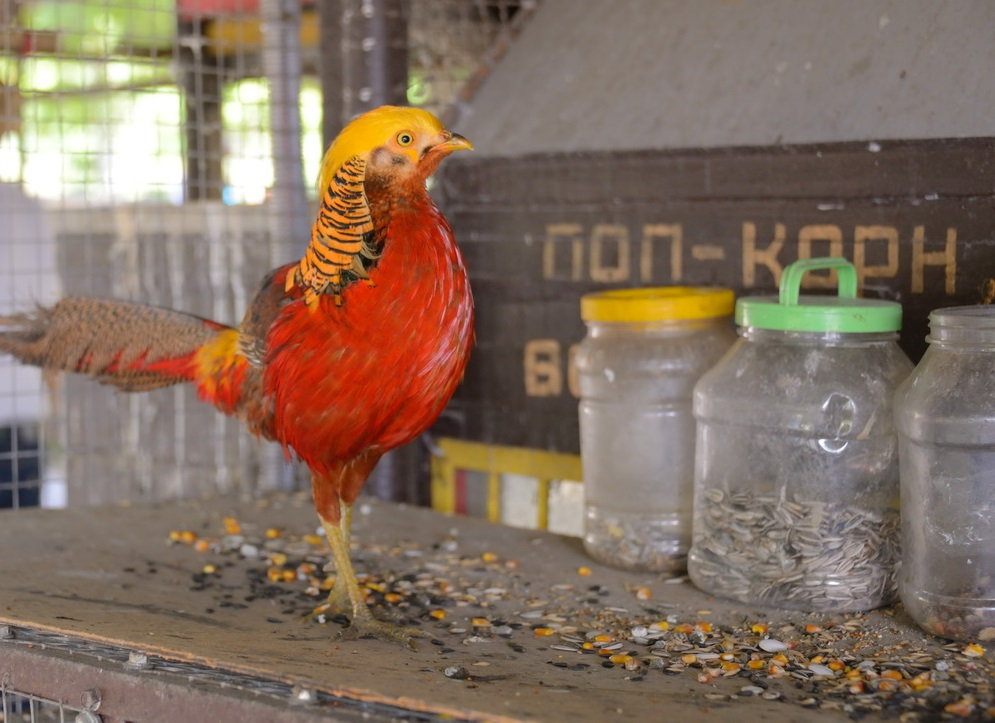 Куда исчез ворон из парка Фрунзе в Новороссийске и какова судьба всех контактных зоопарков