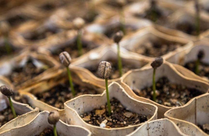 Огородники Новороссийска уже вплотную занялись семенами и рассадой