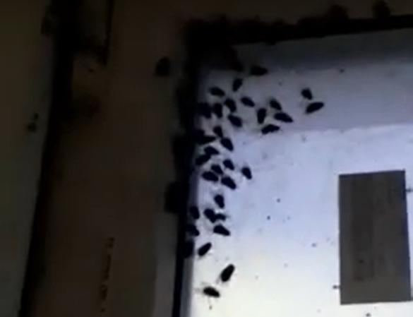 С вонью и мухами провели новогодние праздники жители дома № 14 по ул. Героев Десантников. И пожаловались в редакцию «НР».