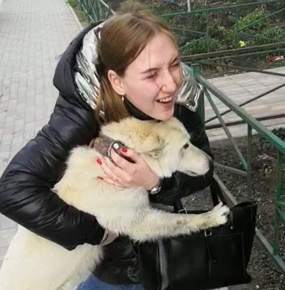 Пошел гулять и потерялся: две недели в Новороссийске искали пропавшую собаку