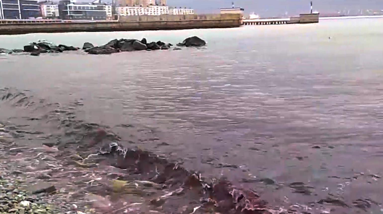 Кто подкрашивает море Новороссийска в красный цвет?