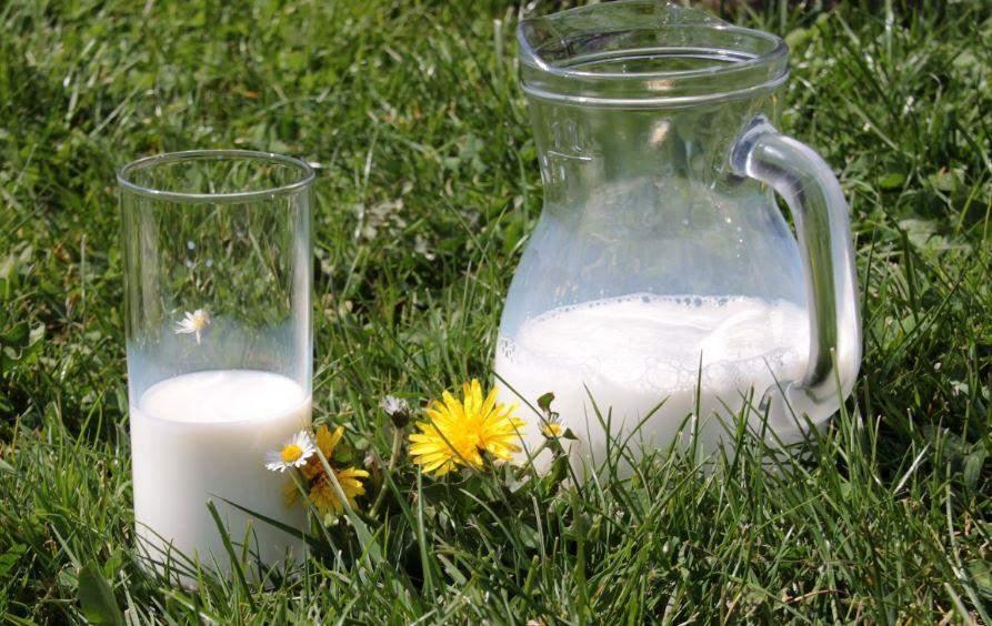 Почему молоко горчит и не прокисает