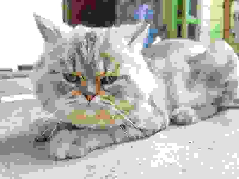Есть повод кастрировать кота: впочти праздничный день ветклиники дарят скидку