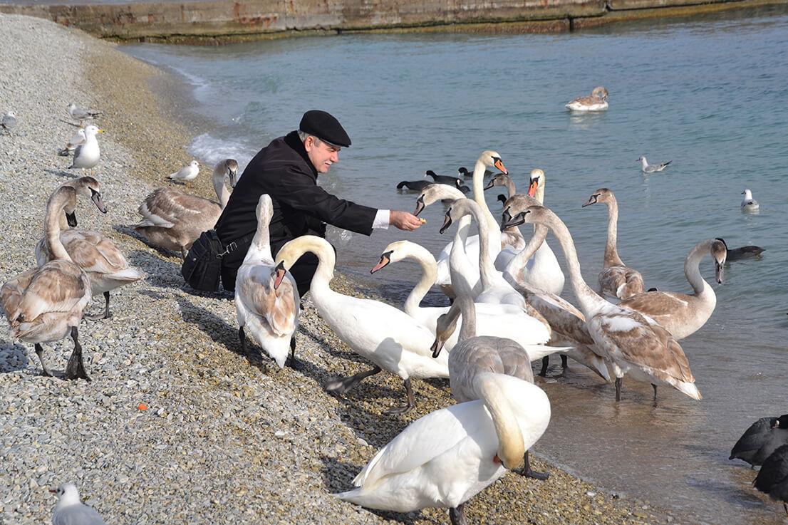 ВНовороссийске напляже вАлексино бесплатно раздают правильный корм для птиц