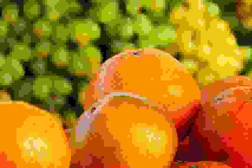 Почти тысячу тонн зараженных фруктов не пустили в Россию