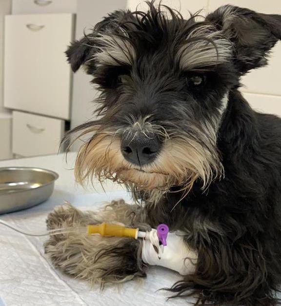 Ветеринарная клиника спасла не только щенка, но и хозяйку