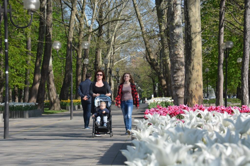 Новороссийск будет утопать этой весной в цветах