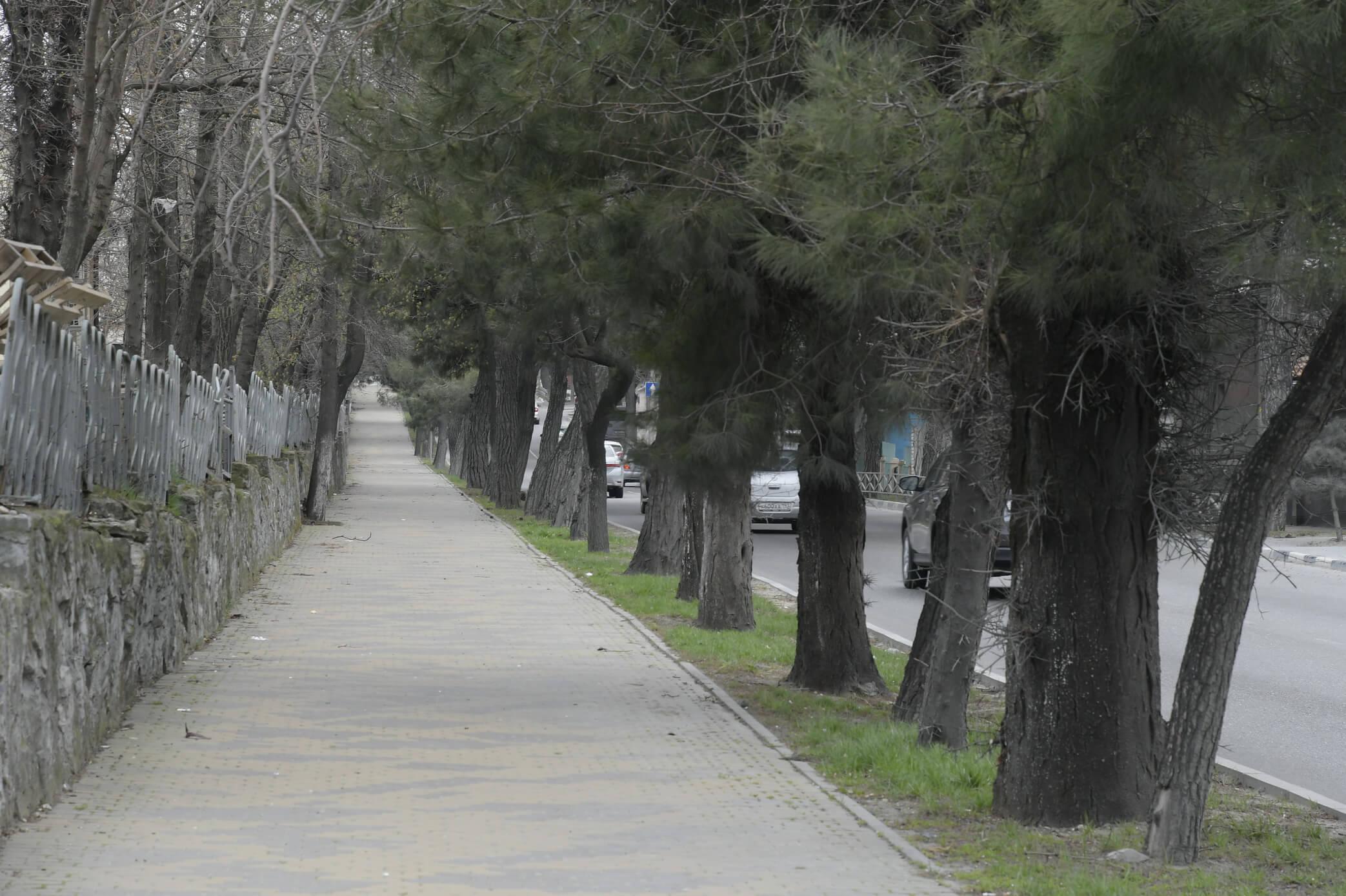 Сосны или дополнительная полоса? ВНовороссийске прислушались кмнению жителей иоставили зеленую зону