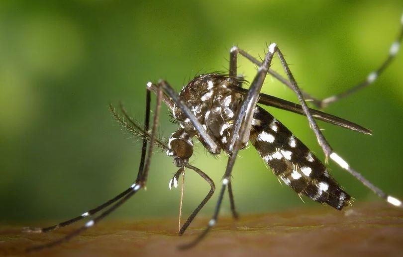 В Новороссийске на борьбу с комарами выделили дополнительные средства