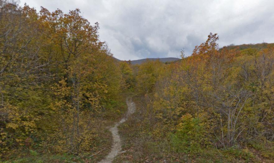 В Новороссийске застройка в лесной зоне может оказаться незаконной